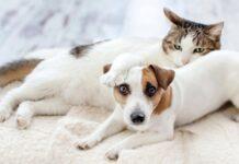 zampa gatto su cane