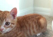 gattini giocano prima volta con cubetto di ghiaccio reazione video