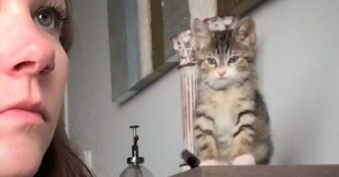 gattini si vendicano con ragazza dopo taglio unghie