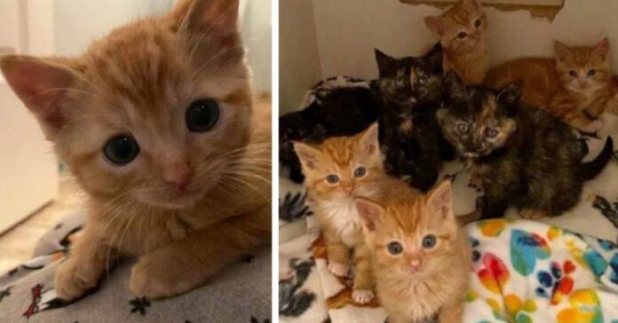 gattini videro avvicinarsi una ragazza non immaginano fine del genere