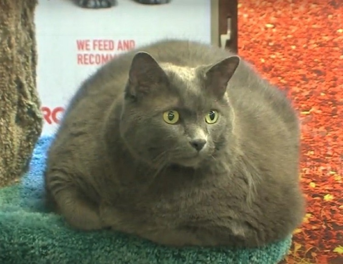 shadow gatto abbandono 15 kg