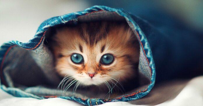blinkin gattino amicizia