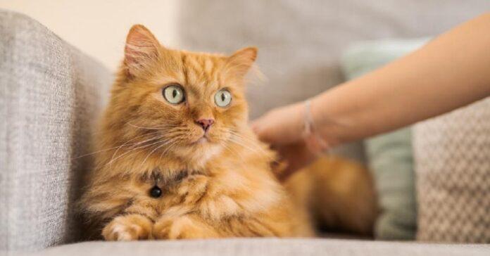 cosmo gattino bambino