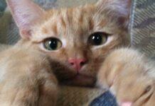 gattino rompe giocattolo