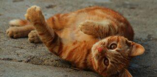 gattino jack scoiattolo