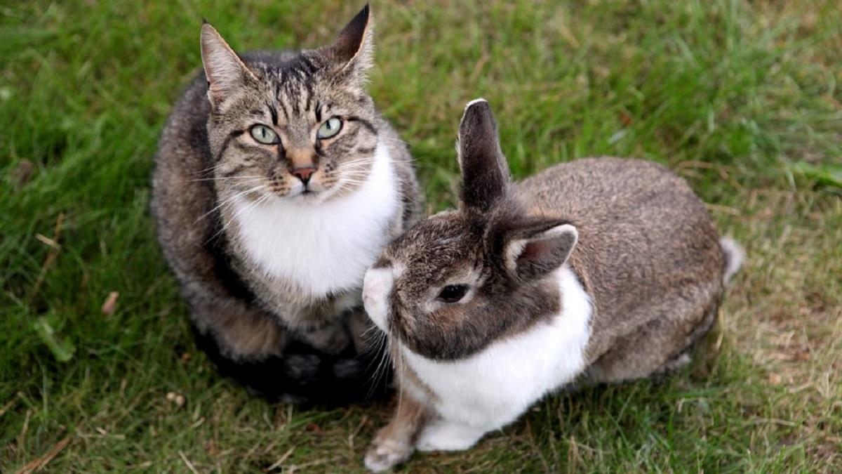 gattino amico coniglietta