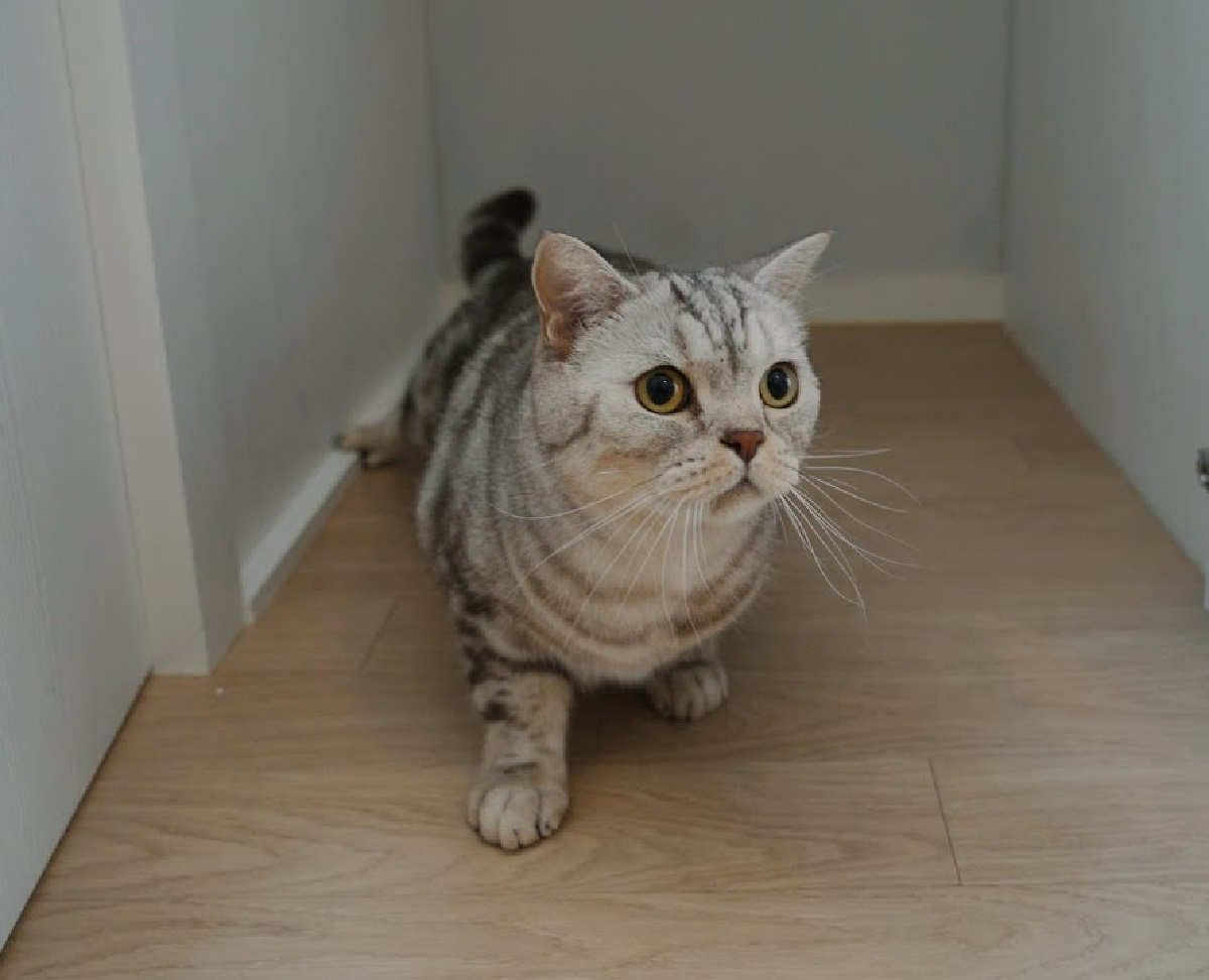 iz gattino labirinto si trasforma mobile