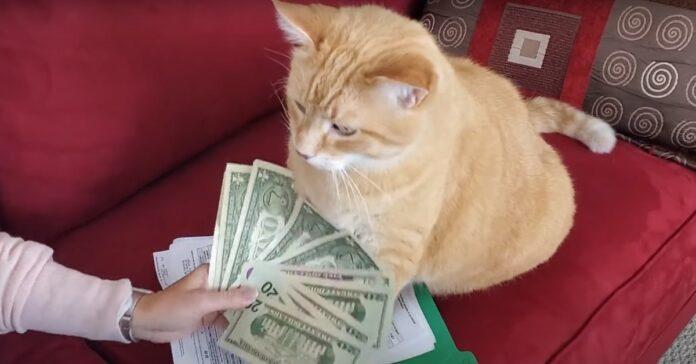 gattino gary soldi