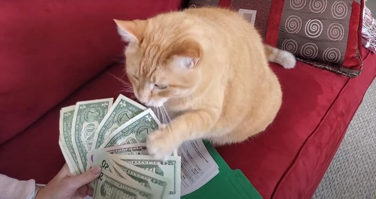 micio banconote conto