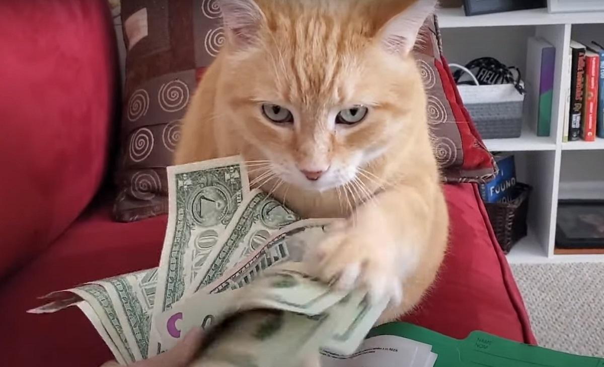 gattino conteggio soldi