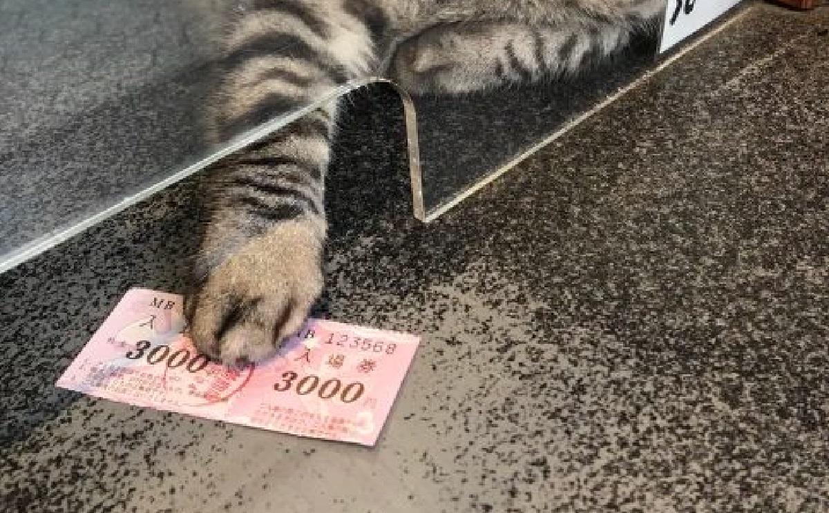 gatto vende biglietto
