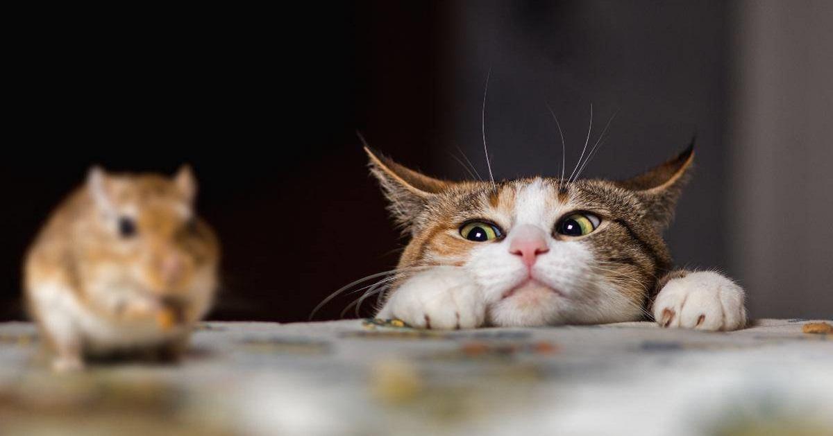 gatto punta topo