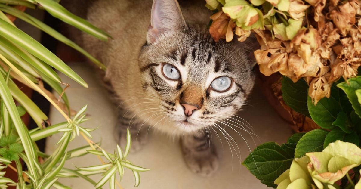 gatto tra i fiori