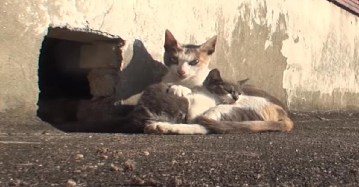 gattina si prende cura del cucciolo disabile
