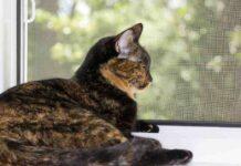 gatto davanti alla finestra