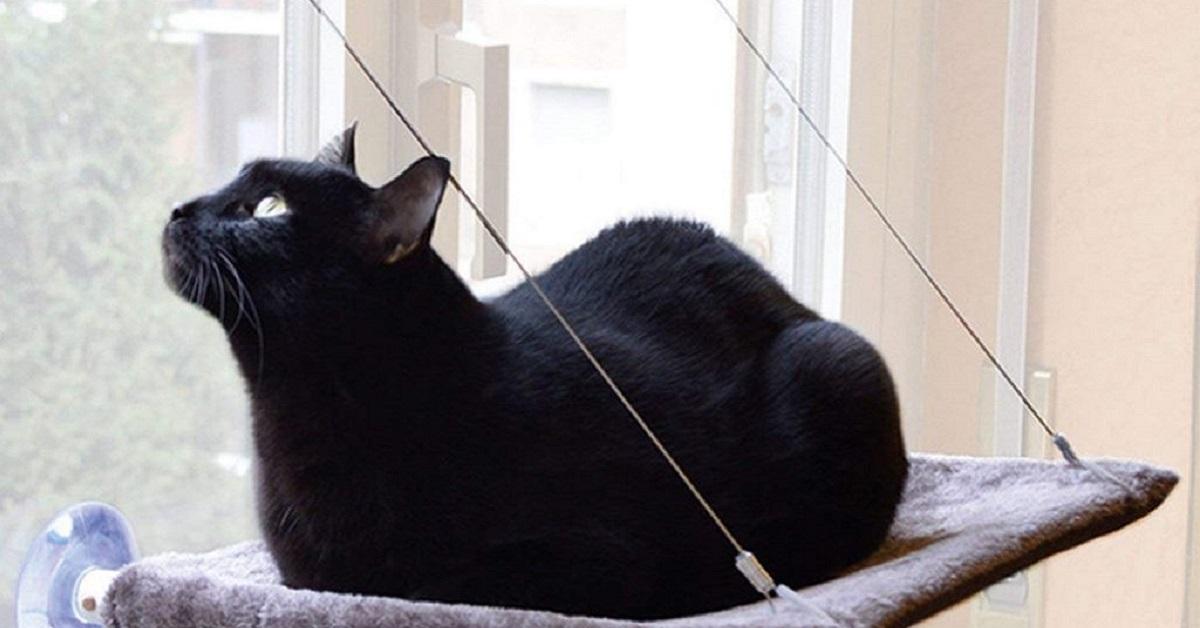 gatto su cuccia alla finestra