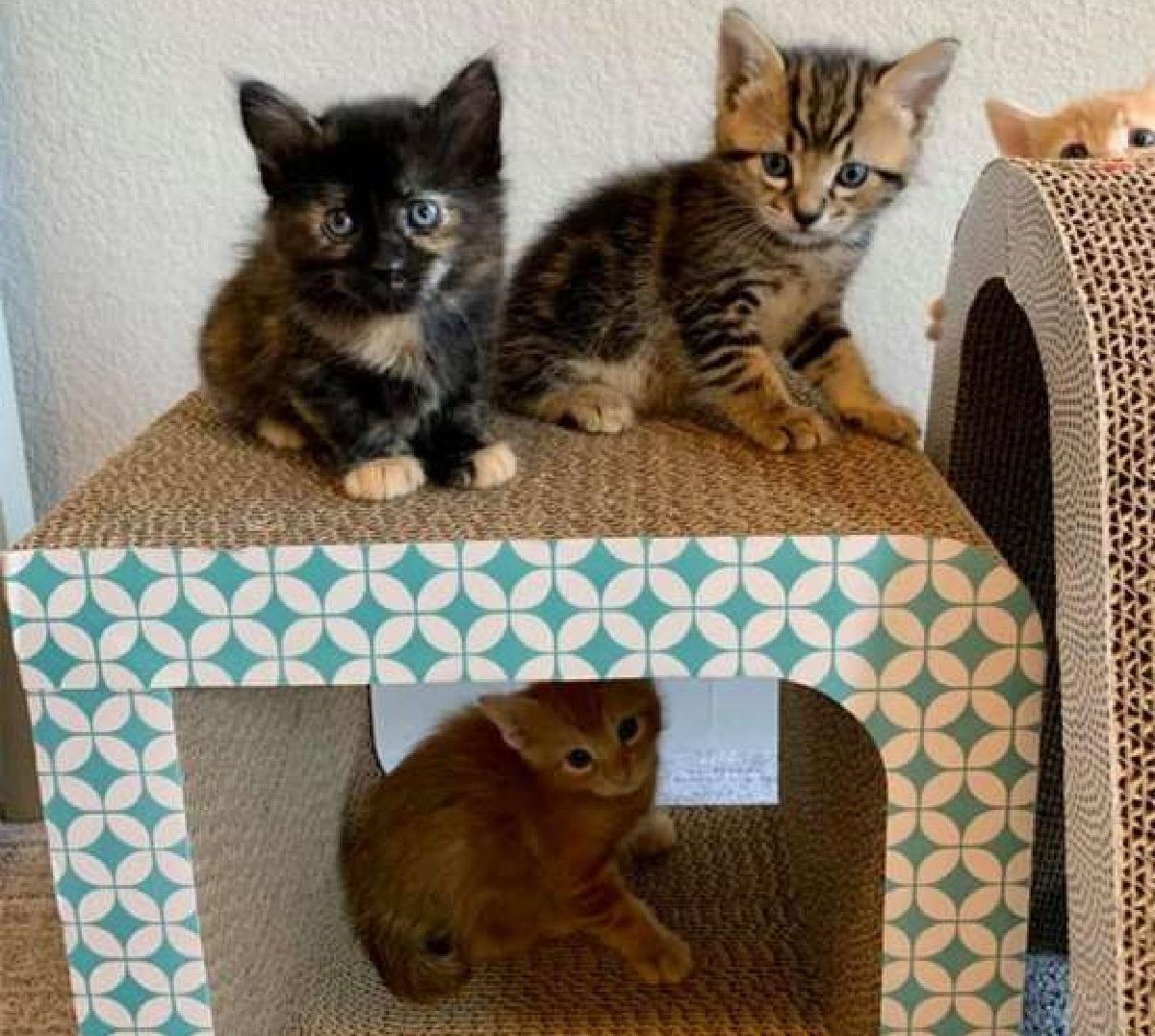 kevin gattina piccoli figlioli