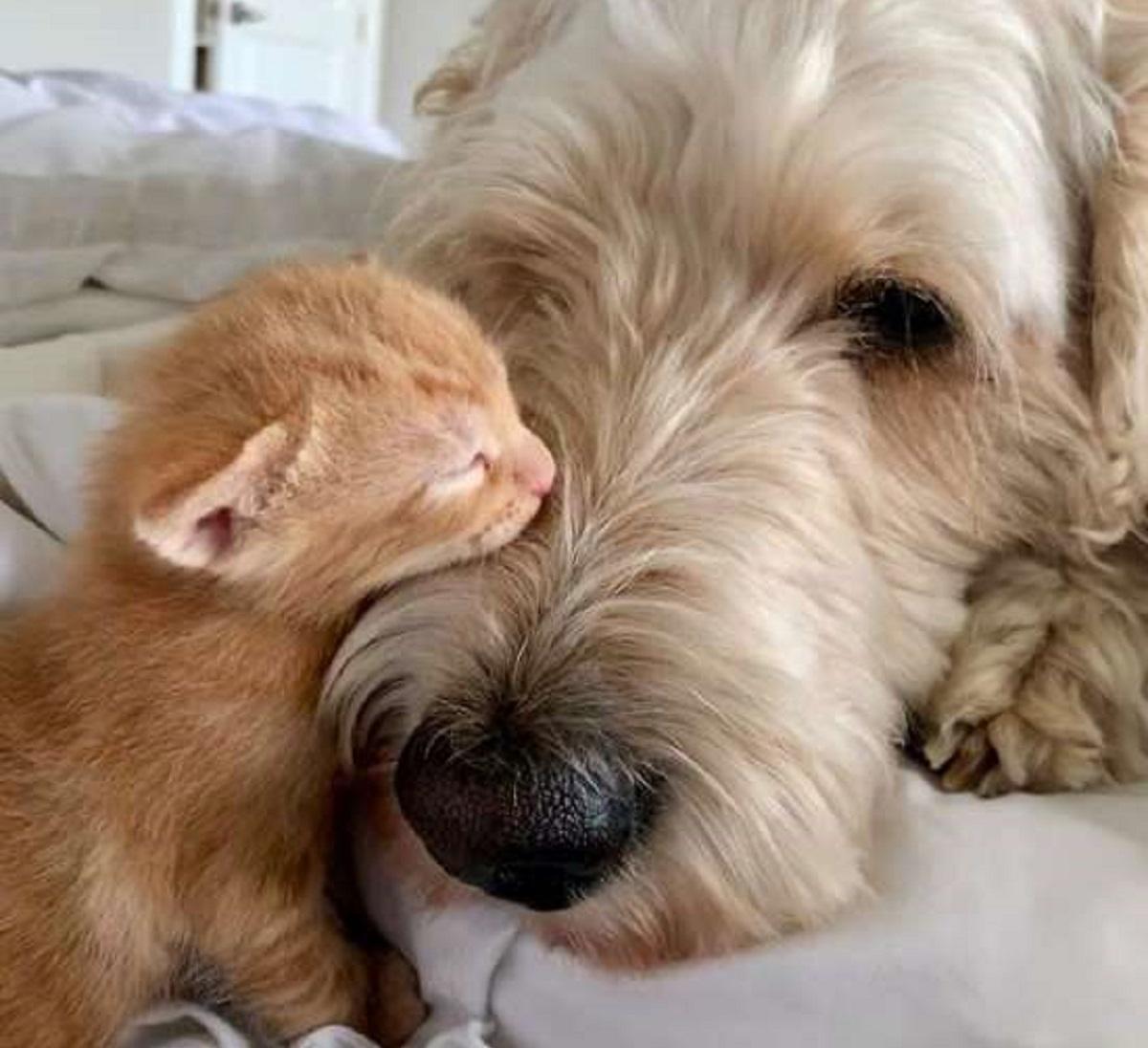 kevin murphy zio dei gattini