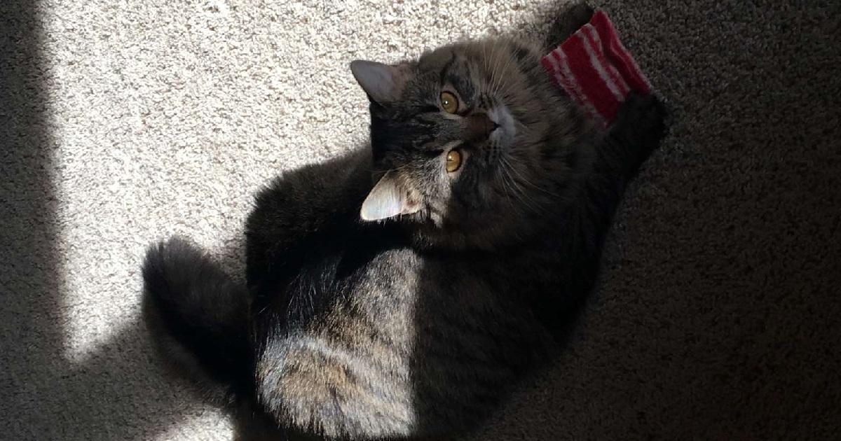 gattina amore cuscino