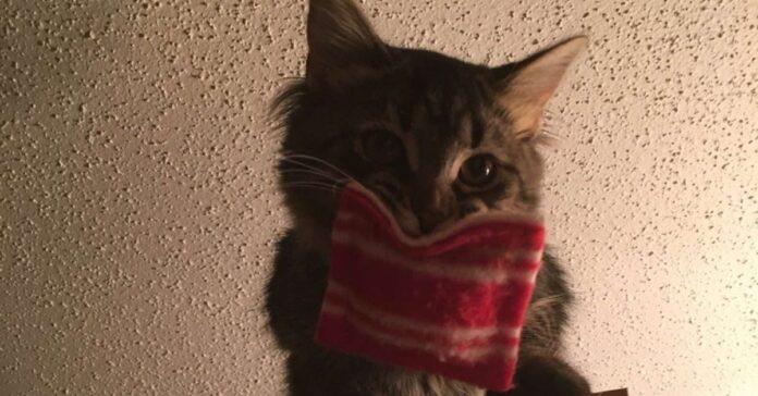 belle gattina cuscino