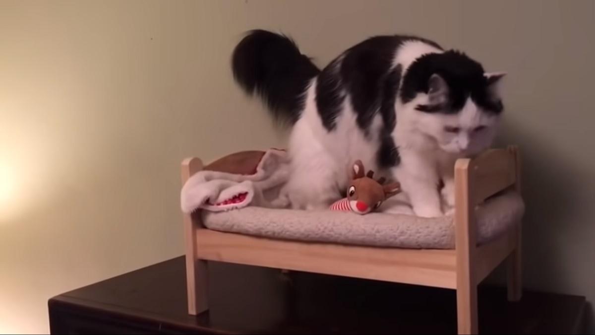gattina lettino materasso
