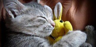 gattina sophie letto