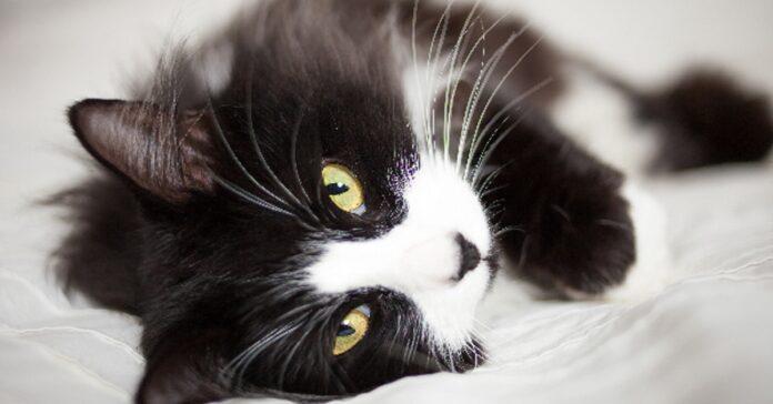 pippa gattina aiuto