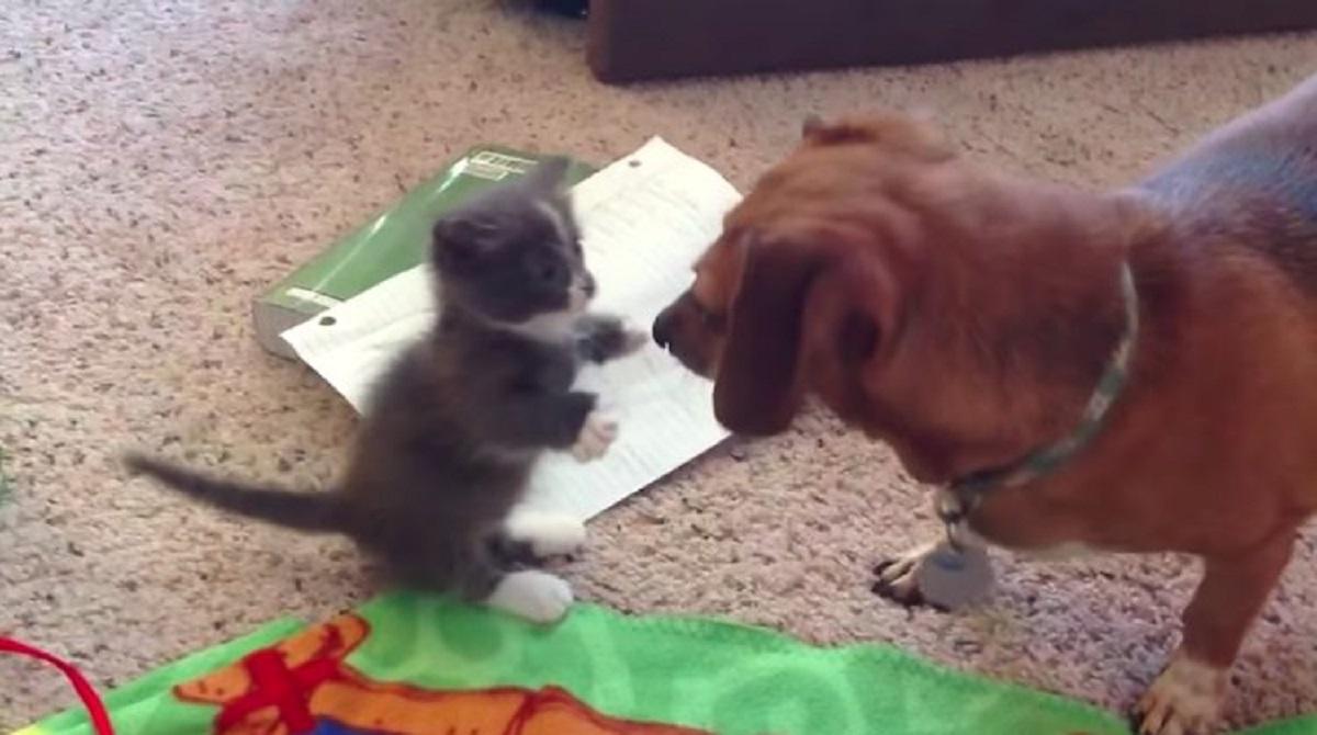 incontro cane gatto