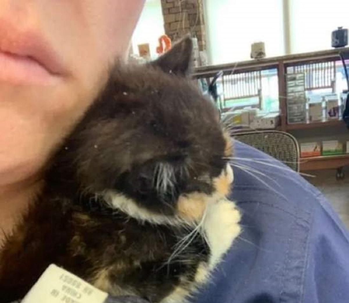 mala gattina intervento soccorritori