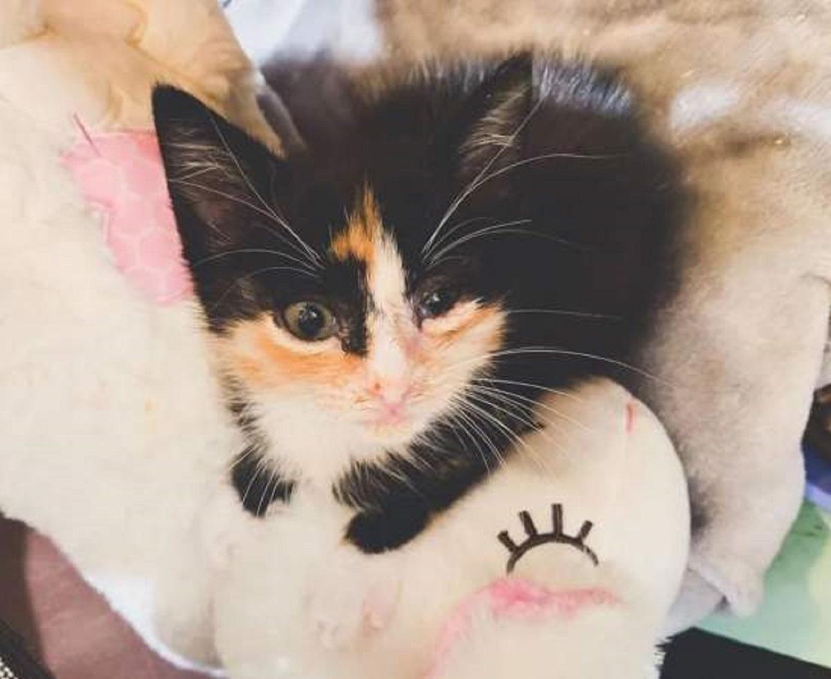 mala gattina visita veterinaria