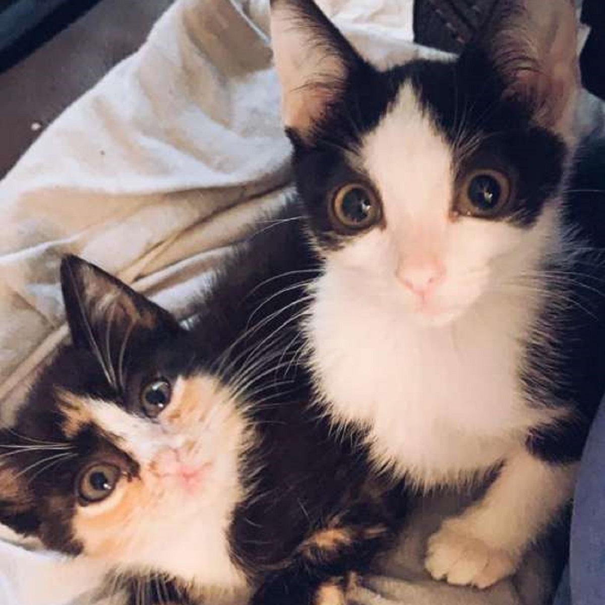 mala gattina conosce amico