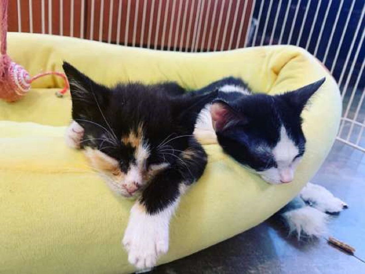 mala gattina fratellino 2per