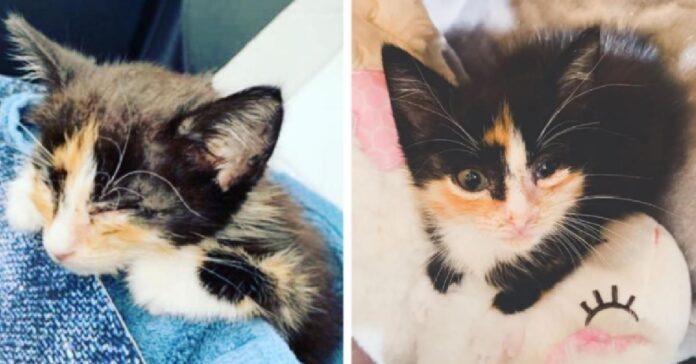 mala gattina calico salvata cortile casa abbandonata