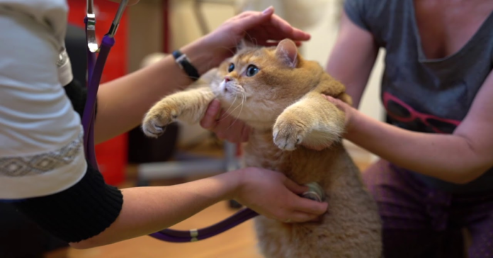 Hosico dal veterinario