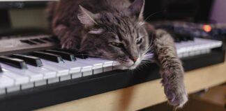 gatto su pianoforte