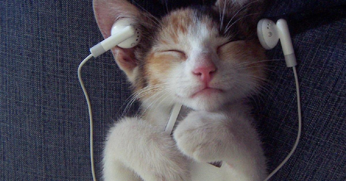gattino con auricolari