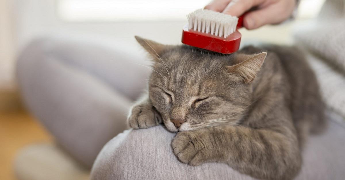 spazzola per gatto