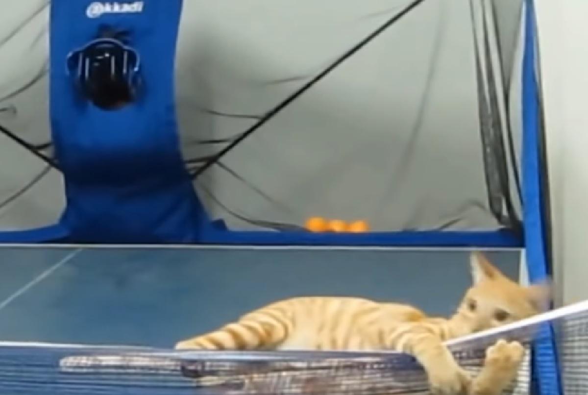 nadi gatto futuro torneo