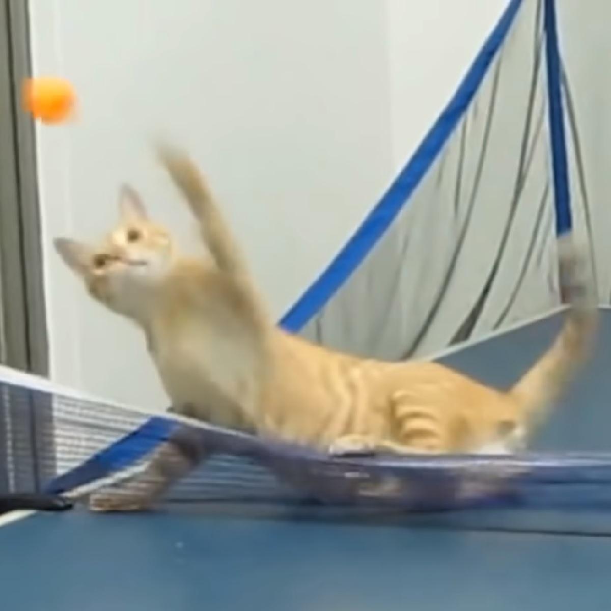 nadi gatto talento puro ping pong