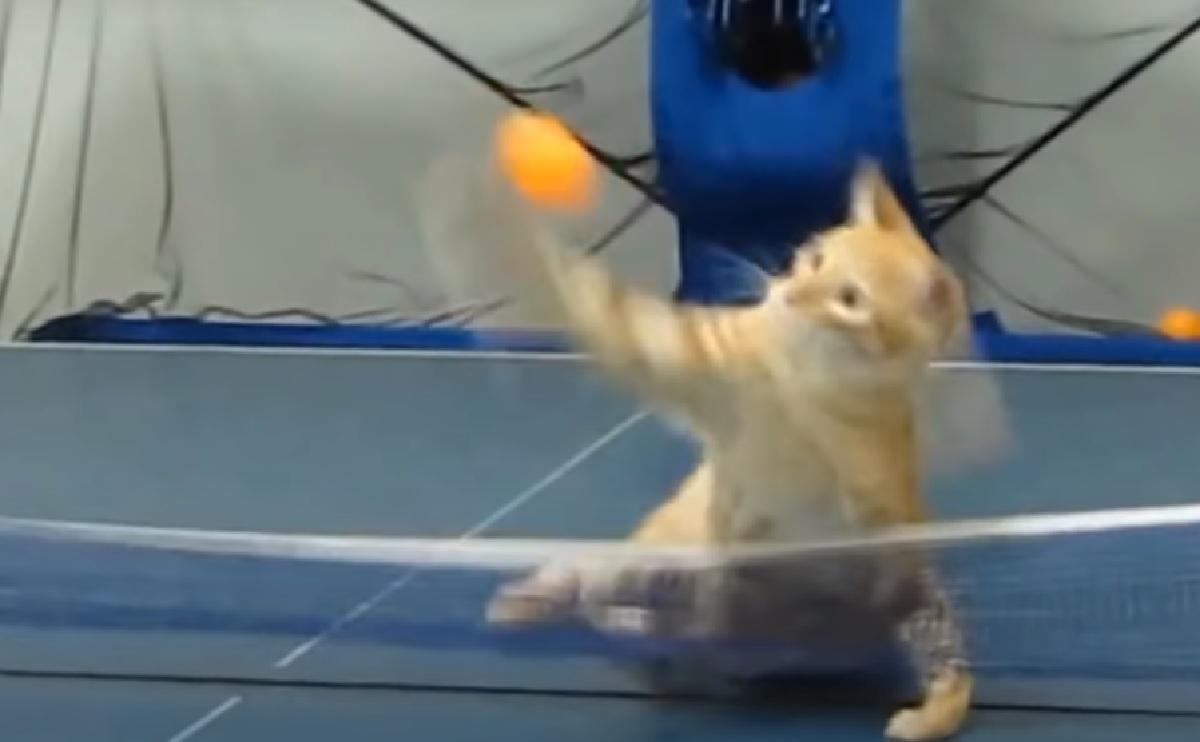 nadi gatto gioca sotto rete
