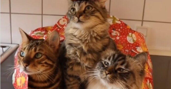 nelly gattina norvegese impara ad amare nuova arrivata