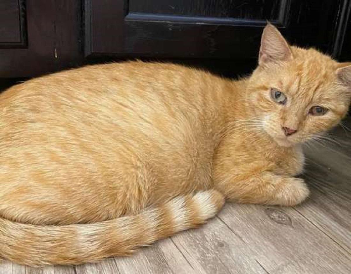 lorelei gattina trovata per strada