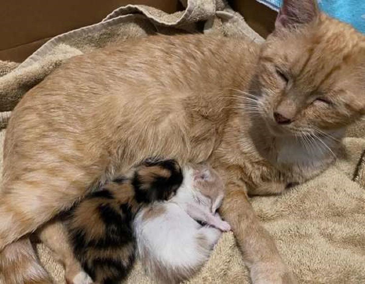 lorelei gattina parto difficile