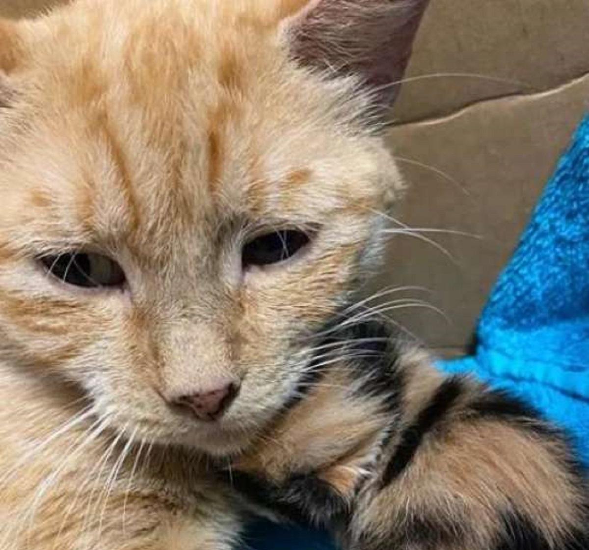 lorelei gattina viva per miracolo