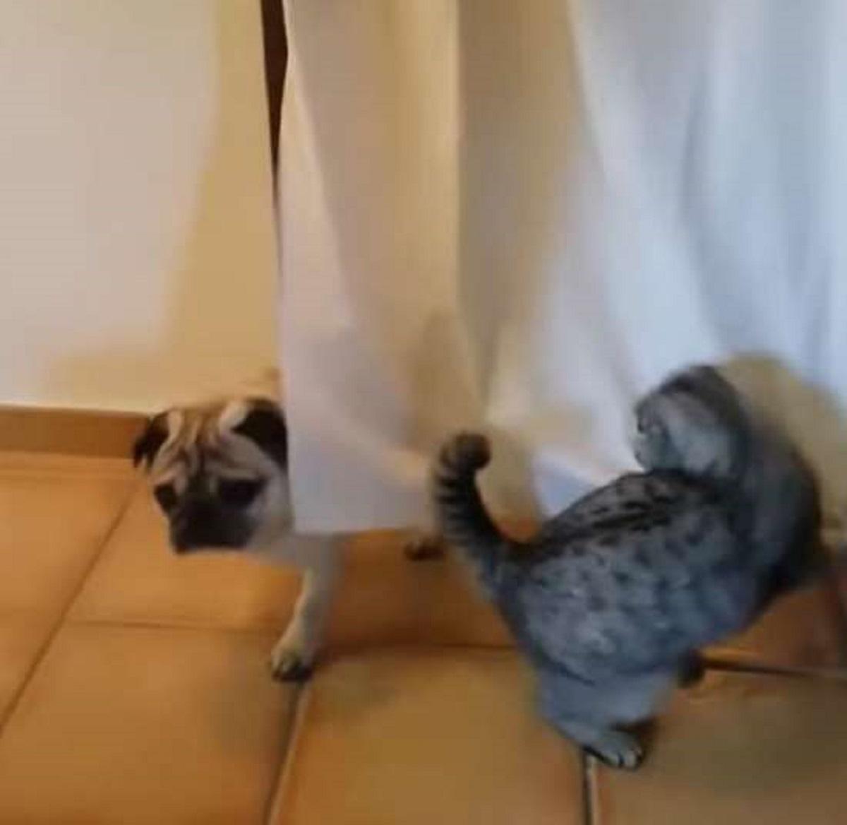 amber gattina sceglie posto giusto