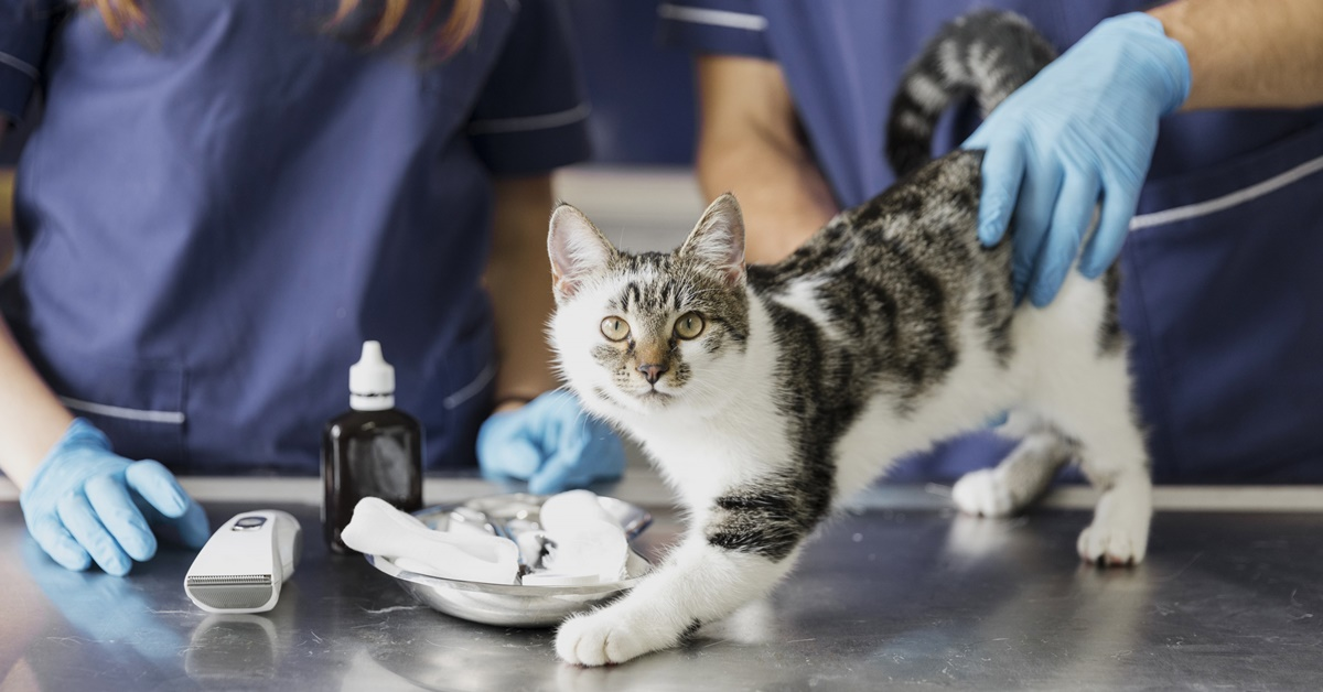 gattino dal veterinario