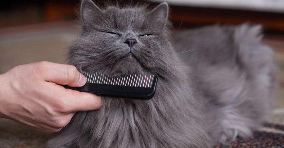 pettine per gatto