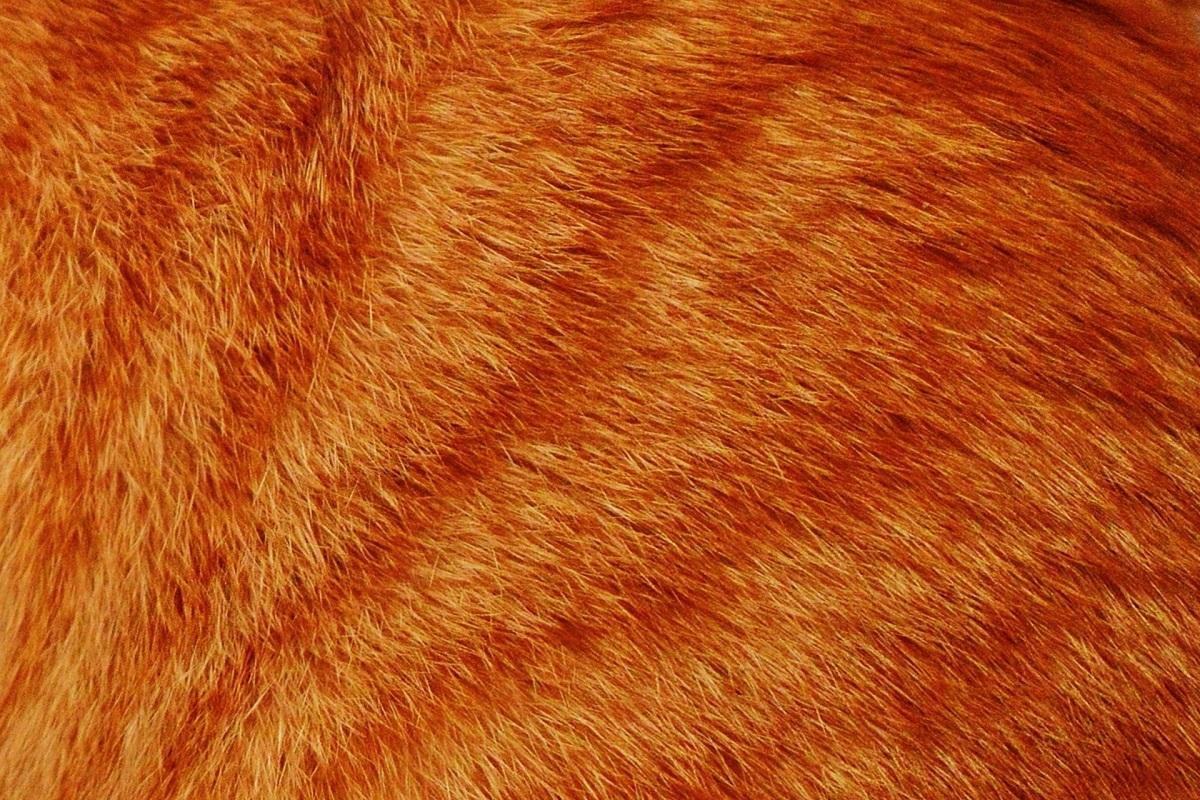 primo piano del pelo di un gatto