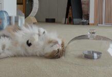 per uno snack gattini devono affrontare campana vetro