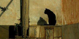perché i gatti leccano i muri